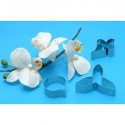 Orchidea 223