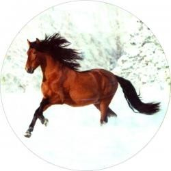 Vafla - kôň hnedý