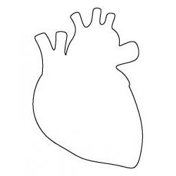 Vykrajovačka pl. srdce anatomické
