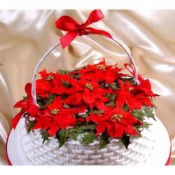 Patchwork - vianočná ruža