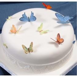 Patchwork motýle