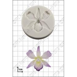 Orchidea A004