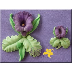 Silik. forma orchidea GSA0024