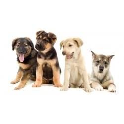 Vafla 4 šteniatka