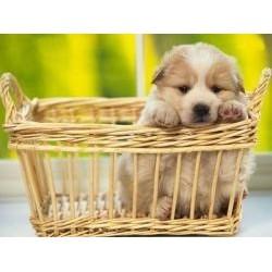 Vafla šteniatko v košíku