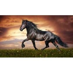 Vafla čierny kôň