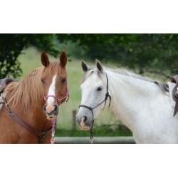 Vafla hnedý a biely kôň