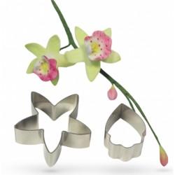 Orchidea 222
